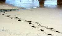 stock-photo-96203817-footsteps-in-sand copy